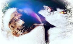 ネコ達のフォトアルバム Cat's photo album