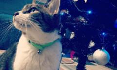 ネコとクリスマスの準備中 Preparing the Cat and Christmas