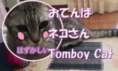 ネコ動画 おてんばネコさん Tomboy Cat