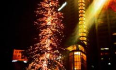 クリスマスイブのツリー  Christmas Eve