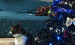 ネコとクリスマスの準備中イメージ動画 It is an image animation